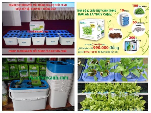Trọn Bộ 60 Chậu Thủy Canh Trông Rau Sạch Tại Nhà + Sản Phẩm Hỗ Trợ
